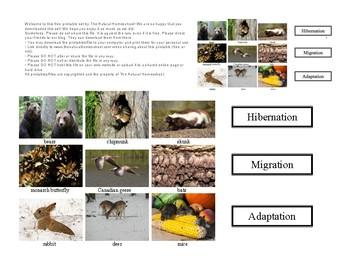 Animals in Winter: Hibernation, Migration and Adaptation activity