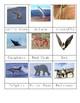 Animals in Winter: Migration, Hibernation & Adaptation