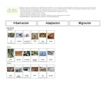 Animals in Winter: Migration, Hibernation & Adaptation IN SPANISH