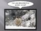 Animals in Winter PowerPoint