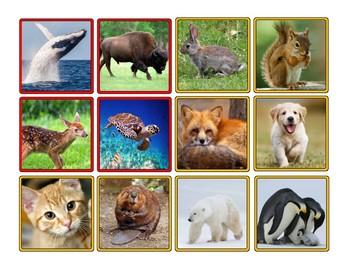 Animals in Winter: Hibernate, Migrate and Adapt Sorting Activity