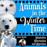 Animals in the Winter ~ Adapting, Hibernating, Migrating Animals