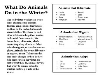Animals in the Winter Information Card and Worksheet