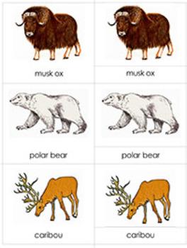 Animals in their Habitat Bundle: Polar Regions