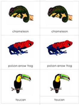 Animals in their Habitat: Rainforest Animals