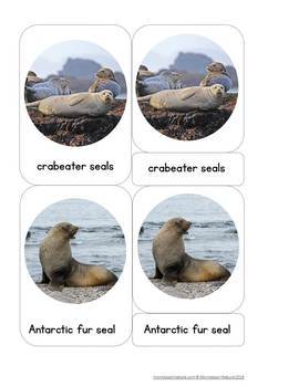 Animals of Antarctica - Safari Toob 3 Part Cards - Editable