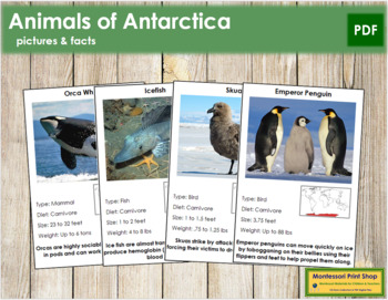 Animals of Antarctica (Red)