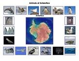 Animals of Antarctica: Montessori Three Part Cards
