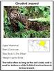 Animals of Asia