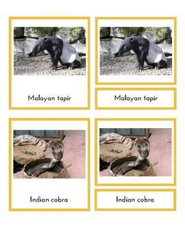 Animals of Asia (3-Part Montessori Cards)