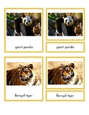 Animals of Asia (3-Part Montessori Cards)