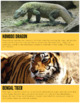 Animals of Asia (Montessori Cards for Continent Box)
