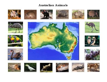 Animals of Australia and Australian Birds Mini Matching - Montessori Bundle