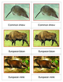 Animals of Europe:Montessori  Three Part Cards