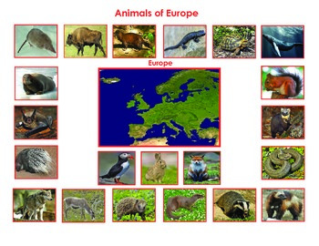 Animals of Europe:Montessori  Three Part Cards