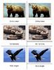Animals of North America- Bundle
