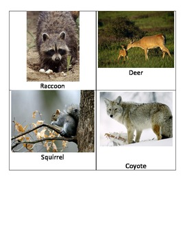 Animals of Ohio Photos and Labels