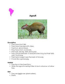 Animals of South America: Research Cards for a Montessori Classroom