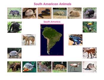 Animals of  South America:Montessori  Three Part Cards