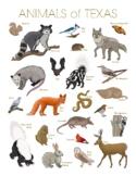 Animals of Texas Printable