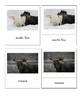 Animals of the Arctic (3 Part Montessori Cards)