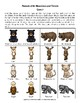 Animals of the Mountains and Forests: Animal Facts Matching Game