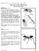 Animals of the Rainforest (Teacher Information)
