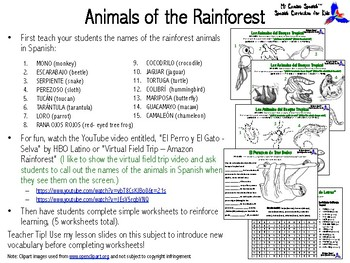 Animals of the Rainforest in Spanish! (Worksheets & Word Search)