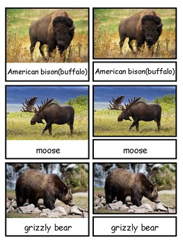 Animals of the Seven Continents for Safari Toobs Montessori 3-part cards