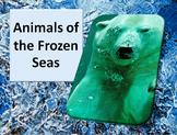 Animals of the frozen seas PowerPoint & worksheet - Read/Match/Crossword/Writing