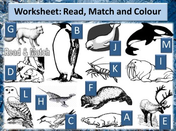 Animals of the frozen seas PowerPoint & worksheet - Read/Match/Crossword/Writing