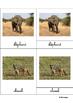 Animals of the savannah, Montessori cards