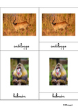 Animals of the savannah, Montessori cards