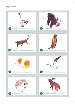 Animals - picture flash cards