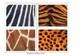 Animals skin patterns -  flashcards