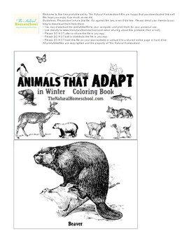 Animals that Adapt in Winter ~ Printable Coloring Book
