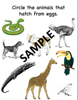 Animals that Hatch from Eggs