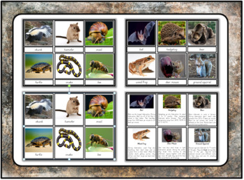 Animals that hibernate printables bundle