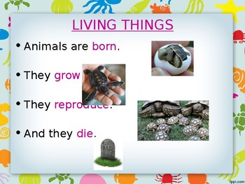 Animals unit for EFL students