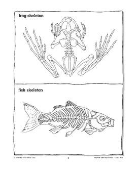 Animals with Backbones Are Called Vertebrates