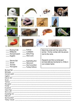 Animals with Cool Defense Mechanisms Activity Sheets