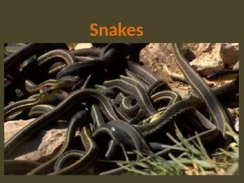 Animals:Snakes! 100% ANIMATED AMAZING