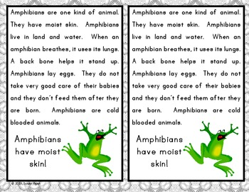 Animania - Frogs, Toads, Salamanders (Amphibians)