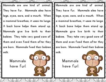 Animania - Mammals