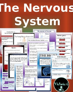 Animated and Interactive PowerPoint The Nervous System