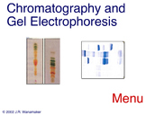 Animation - Chromatography & Gel Electrophoresis