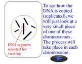 Animation - DNA Replication