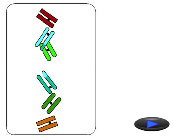 Animation - Meiosis (Lecture Version)