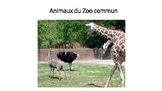 Animaux du Zoo commun ebook