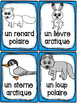 Animaux polaires - Cartes de vocabulaire - French Arctic Animals